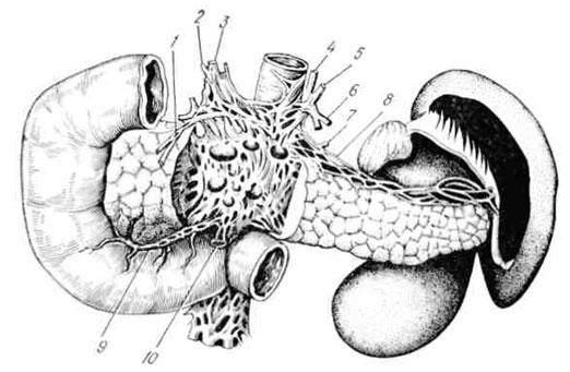 Іннервація підшлункової залози