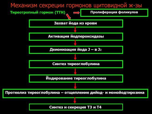 Як правильно оцінювати показники аналізу крові на ттг