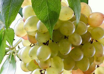 Корисні властивості винограду для вашого здоров`я