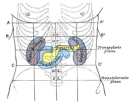 Проекція підшлункової залози