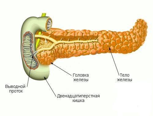 Тіло підшлункової залози